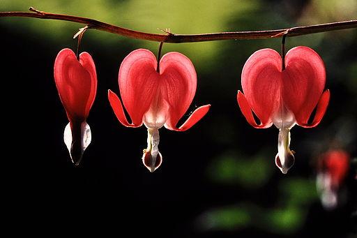 coeur de marie rouge
