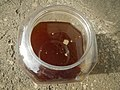 9129Processing and cooking of coconut healing oil in the Philippines 52.jpg