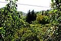 A@a Askas village nicosia cyprus - panoramio (1).jpg