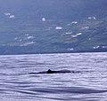 Açores 2010-07-21 (5118421182).jpg
