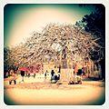 A-POIS Giuditta Nelli - Senegal 2012 - Île De Gorée, Le grand baobab.JPG