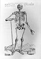 A. Vesalius, De humani corporis fabrica, 1543; skeleton Wellcome L0028557.jpg