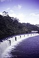 ASC Leiden - F. van der Kraaij Collection - 13 - 029 - The Firestone rubber plantation. A dam for hydro energy surrounded by bushes - Harbel, Montserrado county, Liberia - 1976.jpg