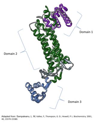 Argininosuccinate lyase - Image: ASL Monomerwithdomains