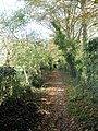 A carpet of leaves on the footpath heading towards Prinsted Lane - geograph.org.uk - 1026498.jpg