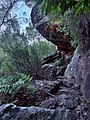 A cave along the bank of Lyrebird Gully - panoramio.jpg