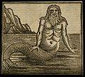 A merman, by the sea. Wood engraving. Wellcome V0007463.jpg