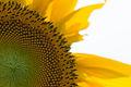 A sunflower (9423499651).jpg