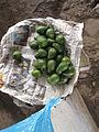 Abacate no Mercado de Wanchaq.JPG