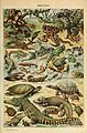 Adolphe Millot reptiles-pour tous.jpg