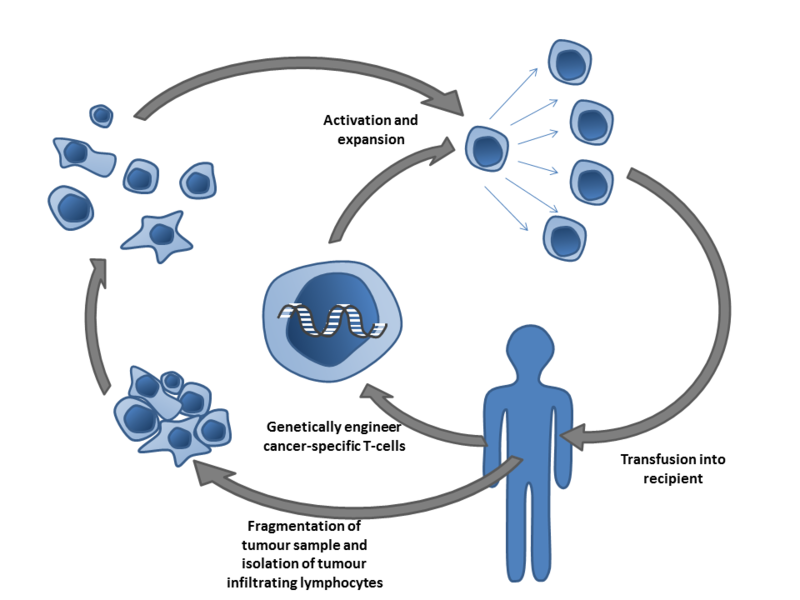 File Adoptive T Cell Therapy Png Wikimedia Commons