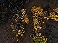 Aerial view of yellow trees (Unsplash).jpg