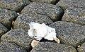 Afgebeten kop van een meeuw (47629400631).jpg