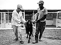 African Zookeeper.jpg