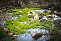 Agua de Santuario.jpg