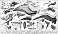 Ailes, planche - Wings, birds, animals, insects, line drawings etc. - Public domain illustration from Larousse du XXème siècle 1932.jpg