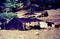 Akkaya Yaylası 28 09 1983 Traktornomaden im Taurus.jpg