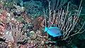 Akumal Scuba Diving (4317046855).jpg