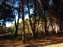 Hindmarsh Island-Alberto Forest-Alberto Forest, Hindmarsh Island