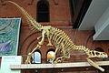 Allosaurus atrox.jpg