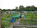 Allotments at Berengrave - geograph.org.uk - 189463.jpg