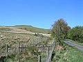 Along The Dalcairnie Road - geograph.org.uk - 422240.jpg