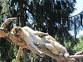 Alsazia montagne des singes 2.JPG