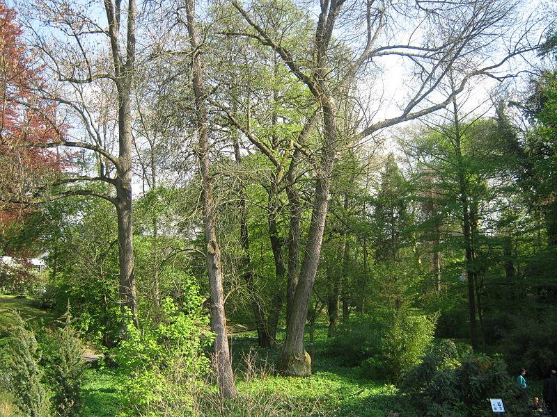 File:Alter Bot. Garten Gö 20.JPG - Wikimedia Commons