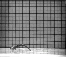 Bestand: Alticus arnoldorum hopping - pone.0011197.s007.ogv