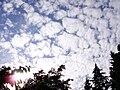 Altocumulus mackerel sky.jpg