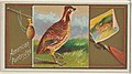 American Partridge, from the Game Birds series (N13) for Allen & Ginter Cigarettes Brands MET DP834656.jpg