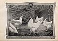 American poultry world (1910) (14756780766).jpg