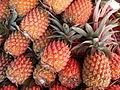 Ananas comosus Victoria P1190459.jpg