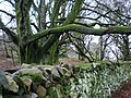 Ancient woodland. - geograph.org.uk - 306782.jpg