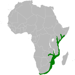Andropadus importunus distribution map.png