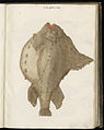 Animal drawings collected by Felix Platter, p1 - (134).jpg