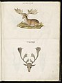 Animal drawings collected by Felix Platter, p2 - (68).jpg