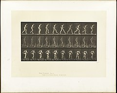 Animal locomotion. Plate 177 (Boston Public Library).jpg