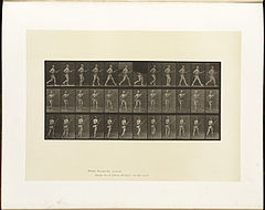 Animal locomotion. Plate 359 (Boston Public Library).jpg