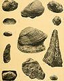 Annales du Musée d'histoire naturelle de Marseille, published aux frais de la ville (1906) (18382957836).jpg