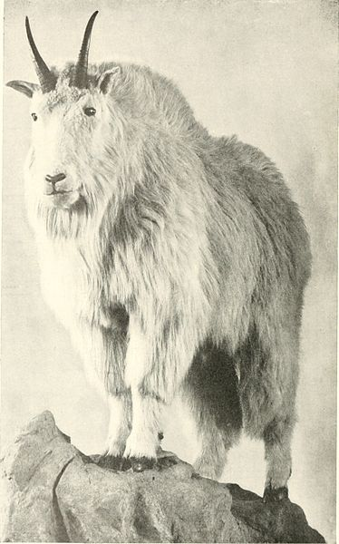 "File:Annual report of the New York Zoological Society"" (1897-) (19365327505).jpg"