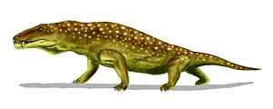 Anteosaurus - Reconstruction of Anteosaurus showing the animal in crocodile-like posture