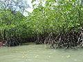 Ao Phang Nga National Park P1120446.JPG