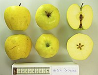 Apfel mit Schnitt Golden Delicious (fcm).jpg