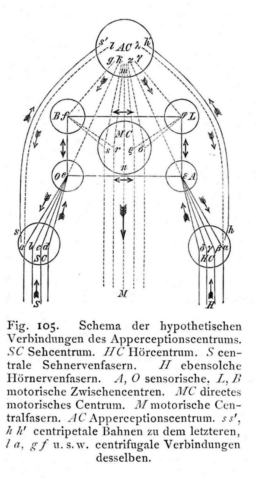 Apperzeptionszentrum (Wundt, Grundzüge, 1903, 5th ed. Vol. 1, p. 324)