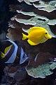 Aquarium at the Royal Ontario Museum (5784270831).jpg