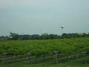 Maple Park, Illinois - Aquaviva Winery in Maple Park, Illinois with the Kaneland High School water tower in the background.