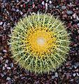 Arizona Desert Cactus (210944351).jpg