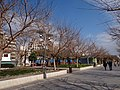 Arxiduc, Palma, Illes Balears, Spain - panoramio (6).jpg