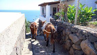 Gli asini rappresentano ancora un mezzo di trasporto nelle zone prive di strade, soprattutto delle isole minori